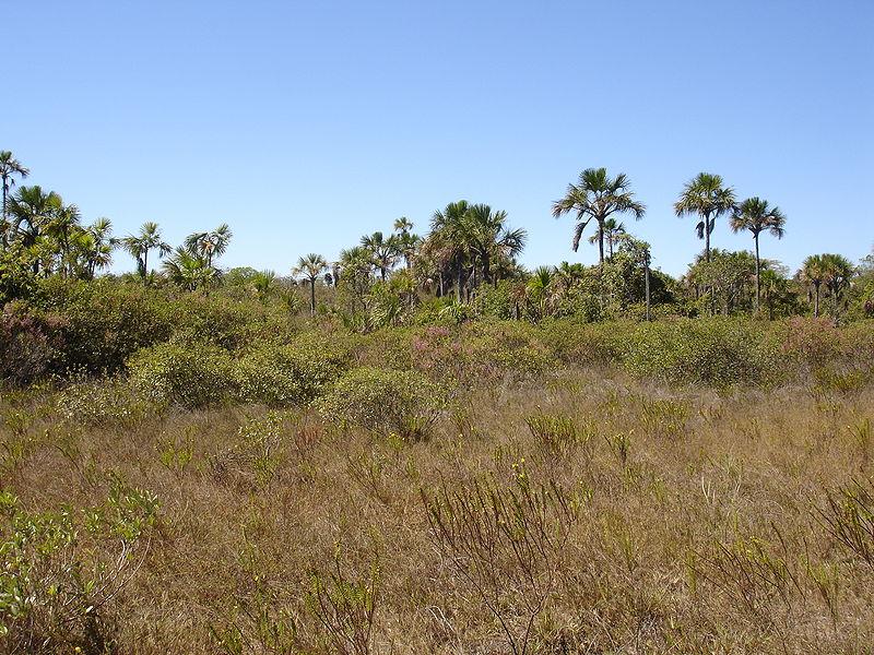 Cerrado Brasileiro - Clima e Relevo